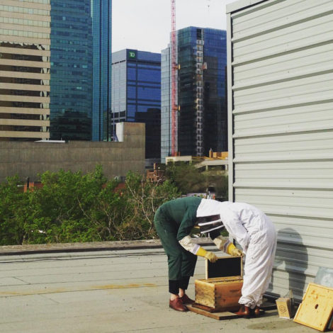 Architect Vedran Skopac and environmental planner Robyn Webb tend to urban beehives atop Manasc Isaac's offices (May 11/16)